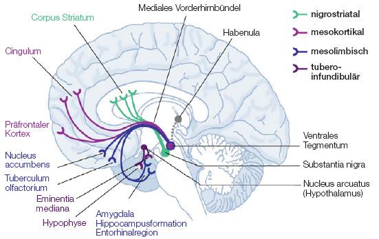 belohnungssystem gehirn dopamin